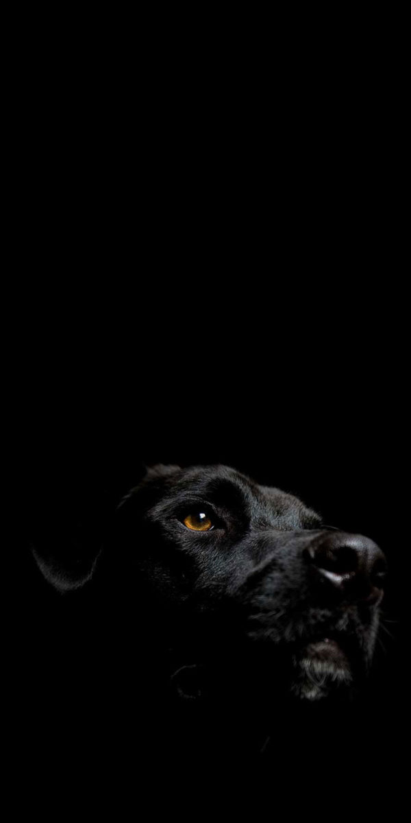 blackdog-year-of-dog-2018-category